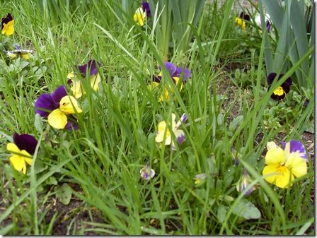 2011_04 Blumen im Garten (1)