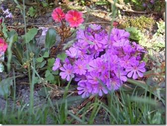 2011_05 Blumen im Garten (4) (800x600)