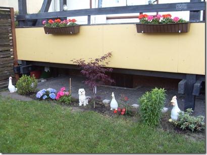 2011_05 Blumen im Garten (2) (800x600)