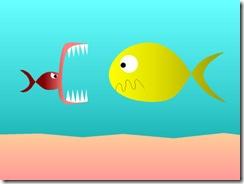 20051229153737-peces