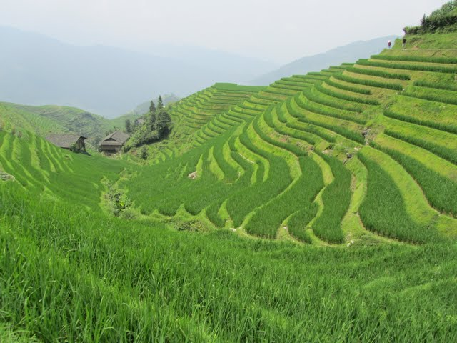 Our trek in Dragon Backbone rice terraces