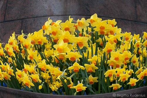 blom_20110405_liljor