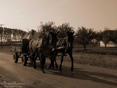 tanja_20110423_horse_sepia