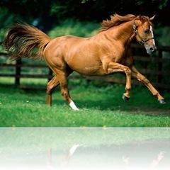 cavalo-2