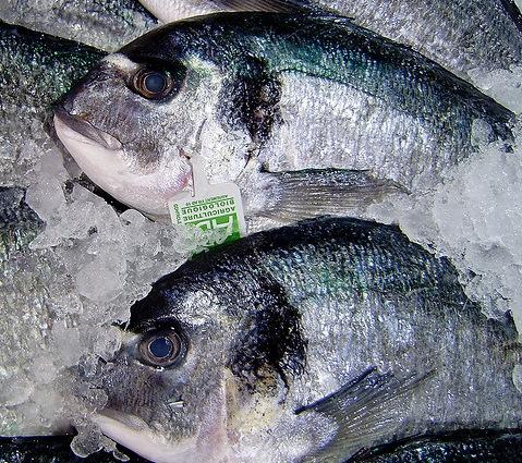 [fish-market[12].jpg]