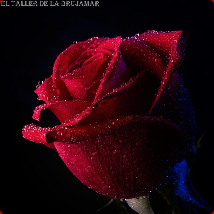 FloresRojas-ElTallerdelabrujaMar-0500