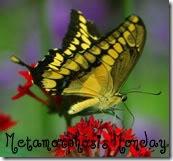 butterfly-09-t-1