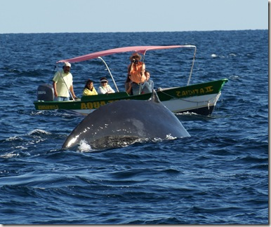 WhaleWatching_Cabo01