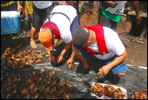 Part of the project, supplying the visiting cruise ship with fresh supplies such as these mud crabs being purchased by the  galley crew of MV Orion