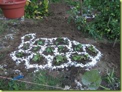 garden round 2 15