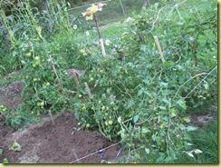 garden round 2 11
