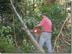 woodcutting 11