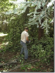 woodcutting 05