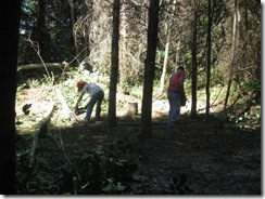 woodcutting 08