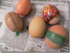 egg day 10