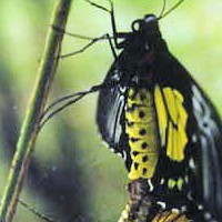 Thumbnail image for Bandilaan Butterfly Farm