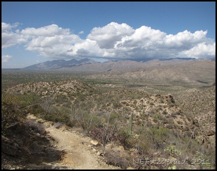 IMG_0798 SaguaroNP