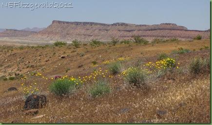 DesertMarigold Hillside