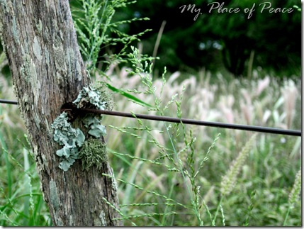 Fence Post 2 Edited Small