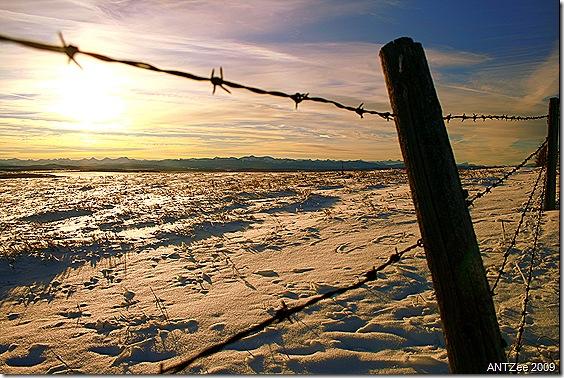 Winter scene near Cochrane
