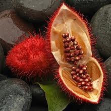 anatto seeds