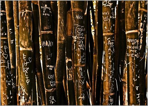 Bamboo Memories