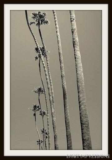 Sky-High Palms Carpinteria