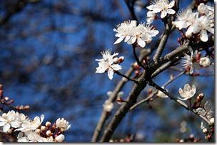 Nice Spring-4