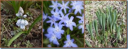 blomsterkollage
