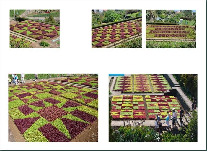 16-funchal,-le-jardin-botanique 4 page 2BW