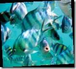 090423-MalaysiaSnorkeling