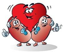 rins ossos coração circulação fisico saude calcio sangue osteoporose - witian blog