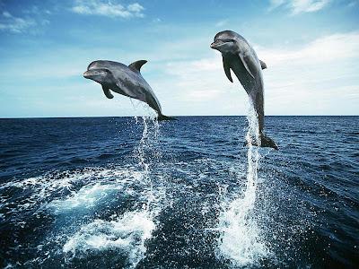 Delfines: Telepatía / Burbujas de aire Delfines
