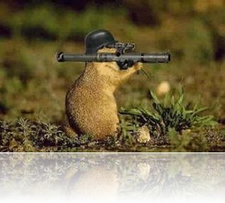 squirrl gun