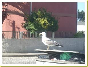 a gaivota
