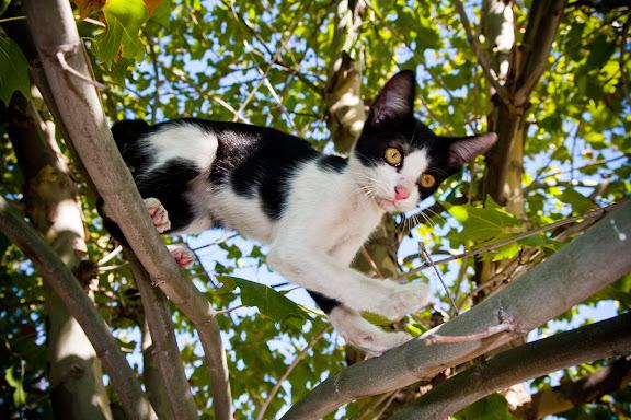 Little Monica Cat Girl Hentai