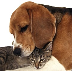 24dog_and_cat