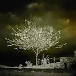 infraredphotography19.jpg