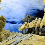 infraredphotography16.jpg