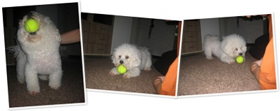 Benno und Tennisball N°2 anzeigen