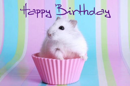 Happy Birthday (8)