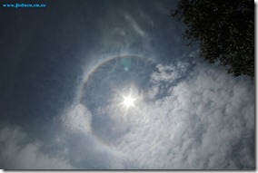 Matahari cincin fedoce