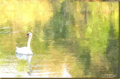 FotoSketcher - Swan