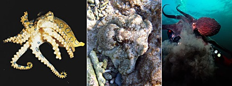 gal_super_octopus_3split