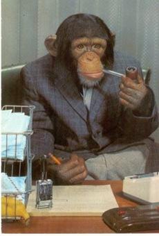 chimpcute2