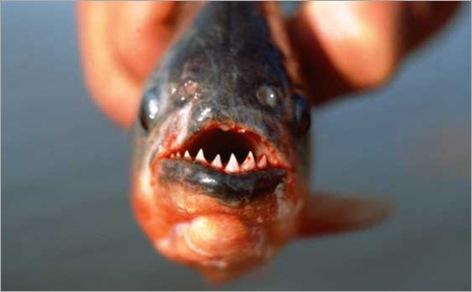 Piranha 10