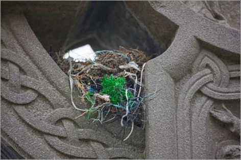 Birds Nests in the Most Bizarre Places 012