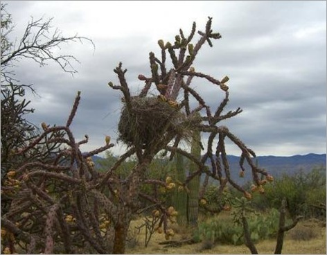 Birds Nests in the Most Bizarre Places 013