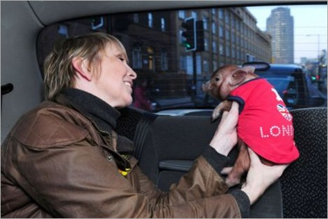 Manuka with owner Jane in a London taxi cab