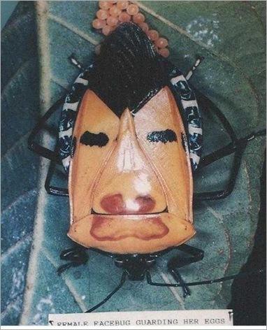 femalefacebug_2